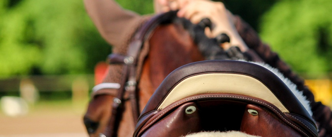 We hope to see you at our horse shows this year! Upcoming events include: